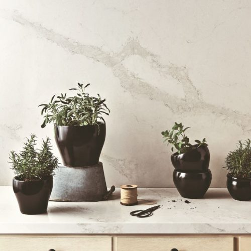 5131_Calacatta_Nuvo_single_1_Herbs